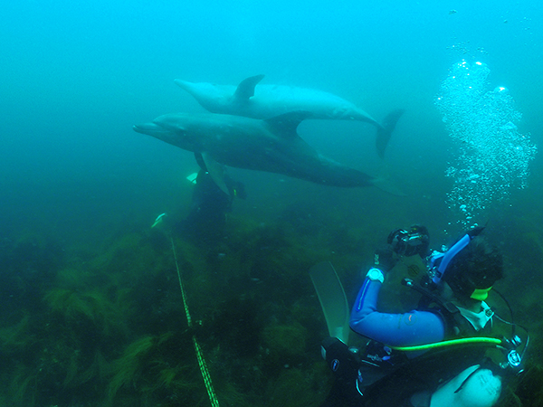 初島 ダイビング イルカ